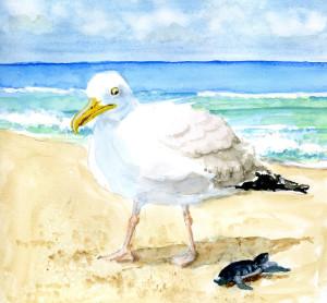 Sea Gull eyes dinner